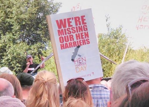 Sign at protest: We're missing out Hen Harriers